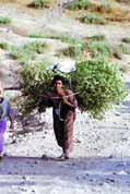 So this is the way how to carry a tree. Lalibela. Ethiopia.