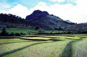 Rice field. Area around Kalaw village. Myanmar (Burma).