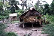Traditional mentawai house. Siberut island. Indonesia.
