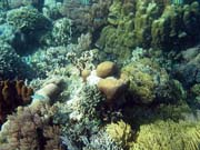 Diving around Bunaken island, Timur dive site. Sulawesi,  Indonesia.