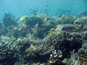 Diving around Bunaken island, Siladan I dive site. Indonesia.