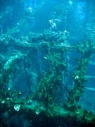Wrack of steel Dutch merchant ship, sunk in 1942. Diving around Bunaken island, Molas Wreck dive site. Indonesia.