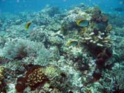 Diving around Bunaken island, Mandolin dive site. Sulawesi,  Indonesia.