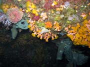 Diving around Bunaken island, Chelo Chelo dive site. Indonesia.