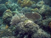 Diving around Bunaken island, Alban dive site. Indonesia.