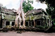 Ta Prohm - temple in jungle. Angkor Wat area. Cambodia.