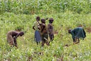 Work at fields. Somba people is mostly farmers. Boukoumbé area. Benin.