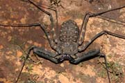 Spider, Korup National Park. Cameroon.