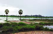 Ricefields around Udong town. Cambodia.