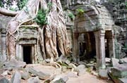 Ta Prohm temple - temple left in the jungle. Angkor Wat temples area. Cambodia.