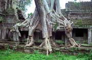 Preah Khan tempel - one of the few left in the jungle. Angkor Wat temples area. Cambodia.