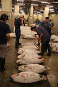 Morning tuna auction. Sellers are checking quality of tunas. Tsukiji fish market, Tokyo. Japan.