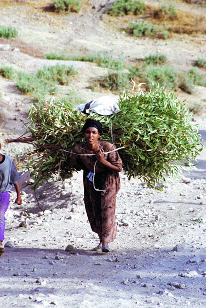 So this is the way how to carry a tree. Lalibela. North,  Ethiopia.