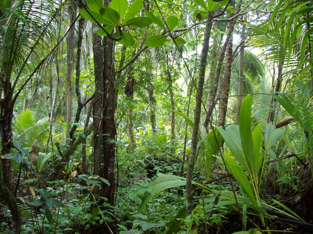 Rainforest. National park Cahuita. Costa Rica.