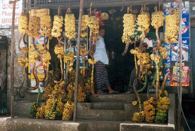 Shop with bananas in Welimada. Sri Lanka.