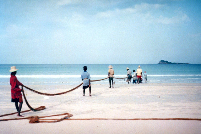 Fishermen pulling several hundred meter long nets and singing. Sri Lanka.