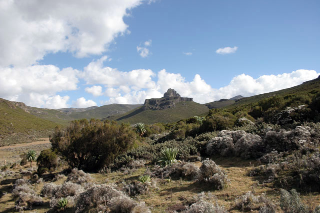 Bale Mountain National Park. South,  Ethiopia.