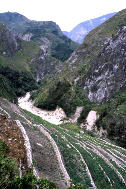 Sweet potato fields. South part of Baliem Valley. Papua,  Indonesia.