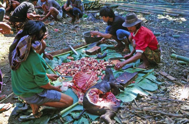 At funeral ceremony. Preparing food for guests. Tana Toraj area. Sulawesi,  Indonesia.