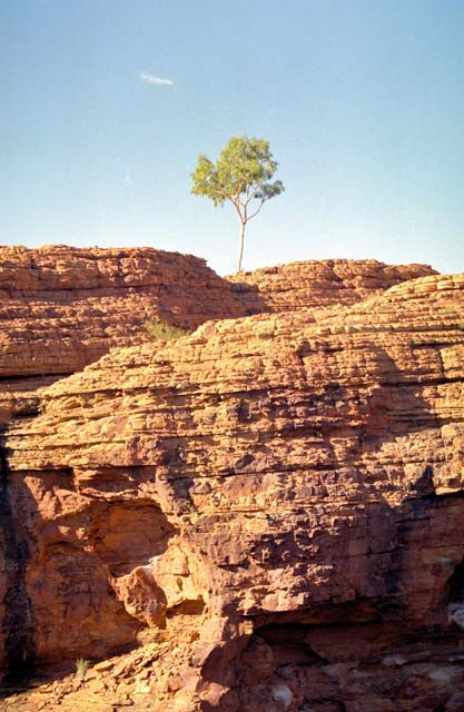 Area called Kings Canyon (Watarrka National Park). Australia.