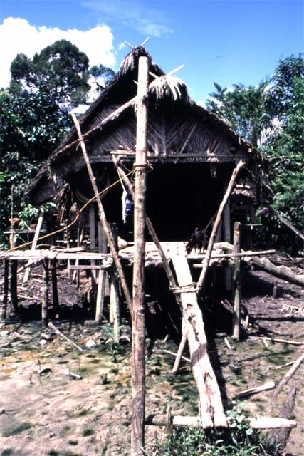 Traditional mentawai house. Siberut island. Sumatra,  Indonesia.