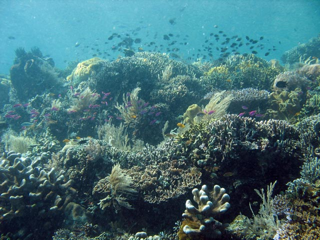 Diving around Bunaken island, Siladan I dive site. Sulawesi,  Indonesia.