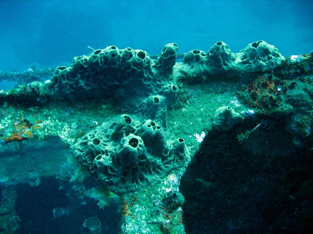 Wrack of steel Dutch merchant ship, sunk in 1942. Diving around Bunaken island, Molas Wreck dive site. Sulawesi,  Indonesia.