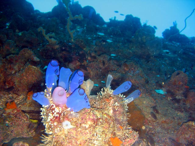 Diving around Togian islands, Kadidiri, around plane wreck B24 from the 2nd World War. Sulawesi,  Indonesia.