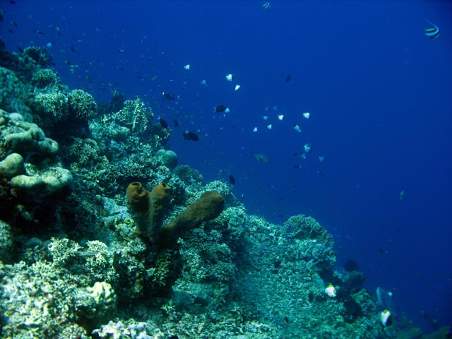 Diving around Togian islands, Una Una, Fishermania/Pinnacle dive site. Sulawesi,  Indonesia.