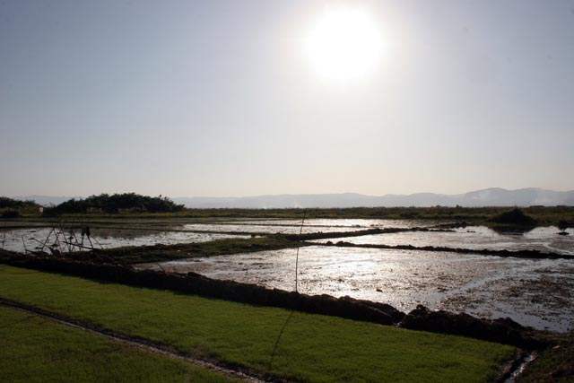 Rice fields around Inle Lake. Myanmar (Burma).