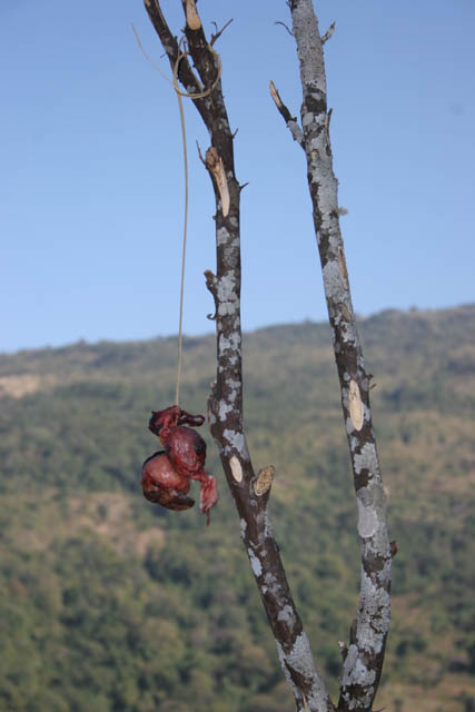 Sacrifice as protection agains bad evils. Kyartho village, Chin State. Myanmar (Burma).