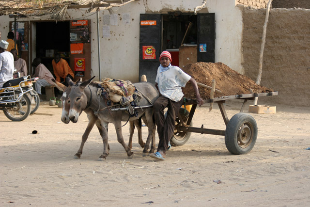 Building material transport. Lake Chad area. Cameroon.