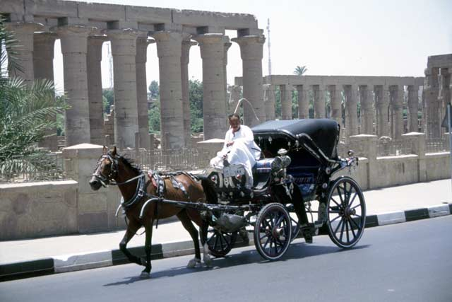 Local transport in Luxor. Egypt.