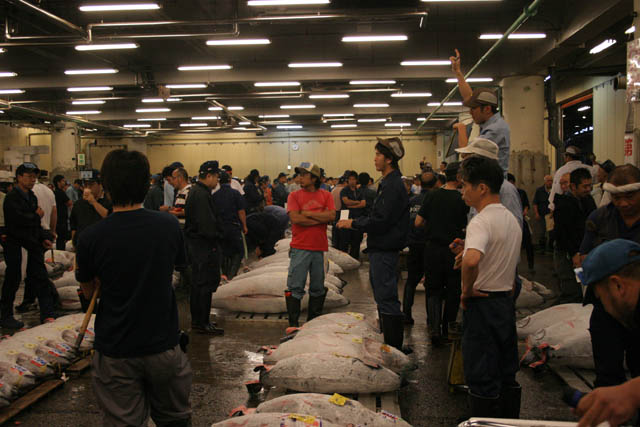 Morning tuna auction - auction is at action. Man is calling prices. Tsukiji fish market, Tokyo. Japan.