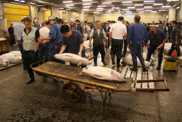 Morning tuna auction - auction is over, sellers are taking their fishes. Tsukiji fish market, Tokyo. Japan.
