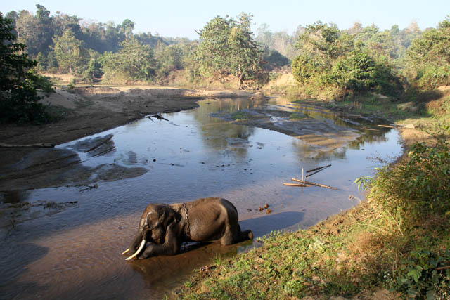 Elephant bath. Camp with working elephants. Taungoo town area. Myanmar (Burma).