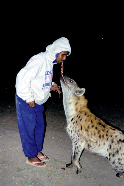 Hyena feeding at Harar. East,  Ethiopia.